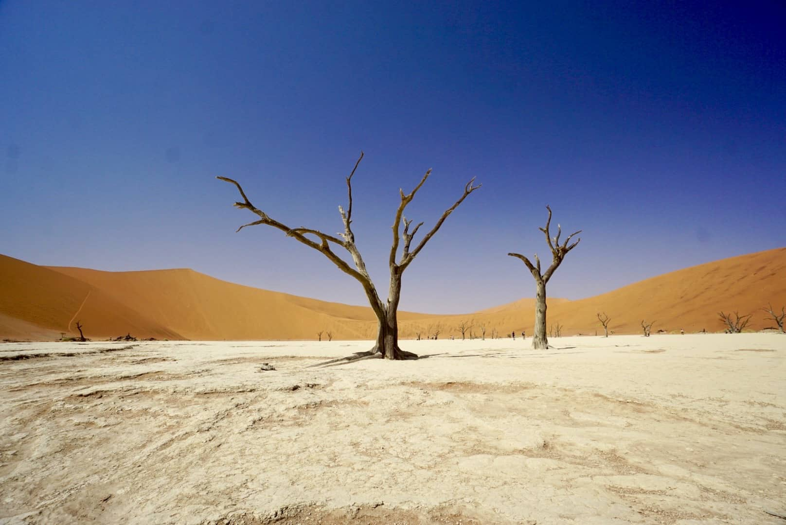 Dead Acacia trees in Africa