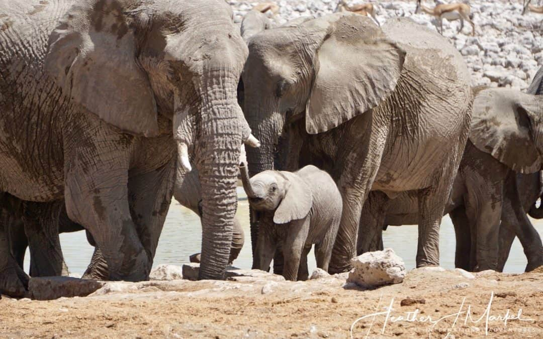 The Big 5 – What It's Like to Experience the Magic of Africa