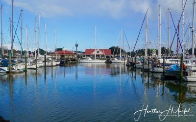 A Few Days In Whangarei – Discover New Zealand
