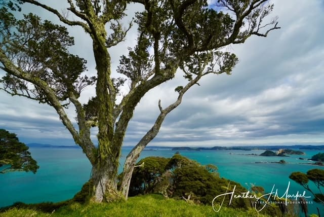 Six More Reasons To Stay Away From New Zealand (Not What You Think)