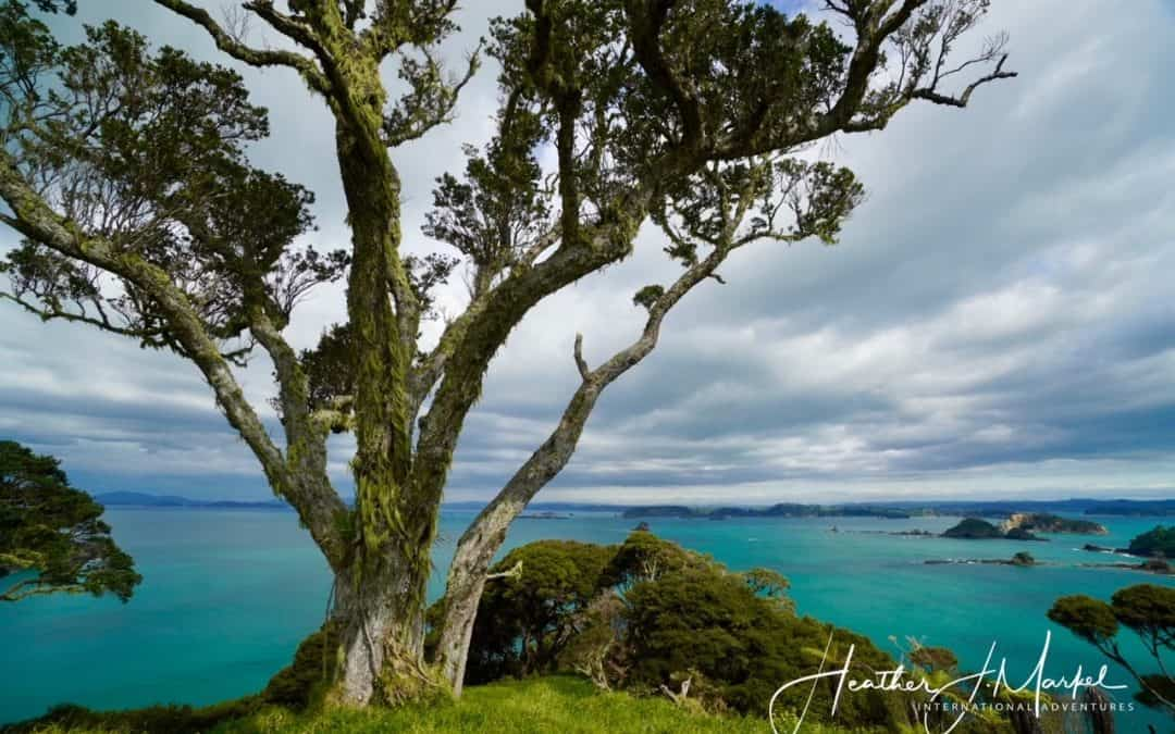 The Unexpected Conundrum Of Being Able To Leave New Zealand